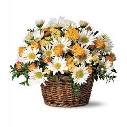 Joyful Roses and Daisies